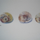 nancy_mclean_shells