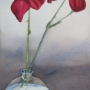 nancy_ mclean_ watercolours_day_lily