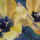 golden_ tulips _nancy _mclean _watercolours