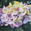 Nancy McLean Watercolours- From an English Garden