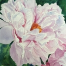 Nancy McLean Watercolours- Pink Peony