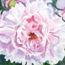 Nancy McLean Watercolours- Vintage Peony
