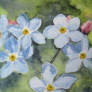 nancy_mclean_forget-me-nots