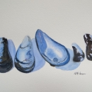 Mussel Shells - Nancy Mclean Watercolours