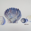 SeaShell Finds- Nancy McLean Watercolours