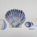 SeaShell Finds- Nancy McLean Watercolours