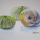 nancy_mclean_sea_urchins_and_shell