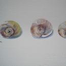 nancy_mclean_shells