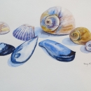 nancy_mclean_watercolours_cape_ breton_ seashells