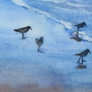 Sandpipers Nancy McLean Watercolours